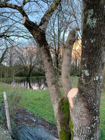Élagage, quelques branches ont dû y passer 😥